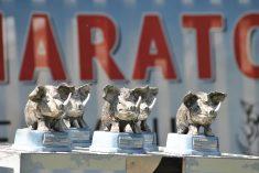 Kuda idu divlje svinje