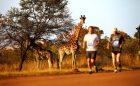 Avantura života: Pet velikih iz zemlje safarija