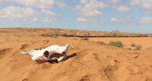 Sahara ipak (ne) prašta
